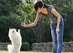 Learn how to train a dog with dog training tips