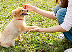 Facts you need to know about online dog training