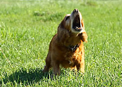 Learn how to stop your dog barking