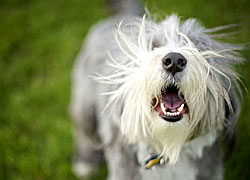 Simple solutions to stop dog barking