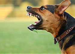 The basics of dog aggression training