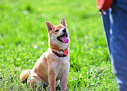 The basics of dog obedience training